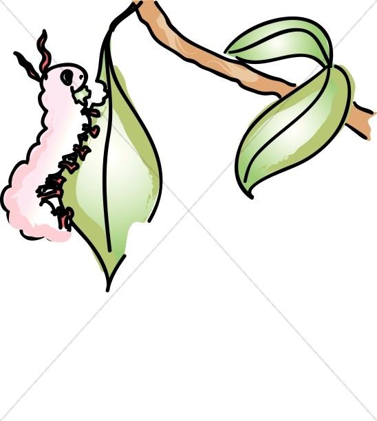 Pink Caterpillar Eating a Leaf