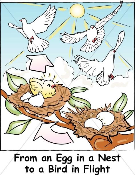 Eggs in the Nest to Flying Birds