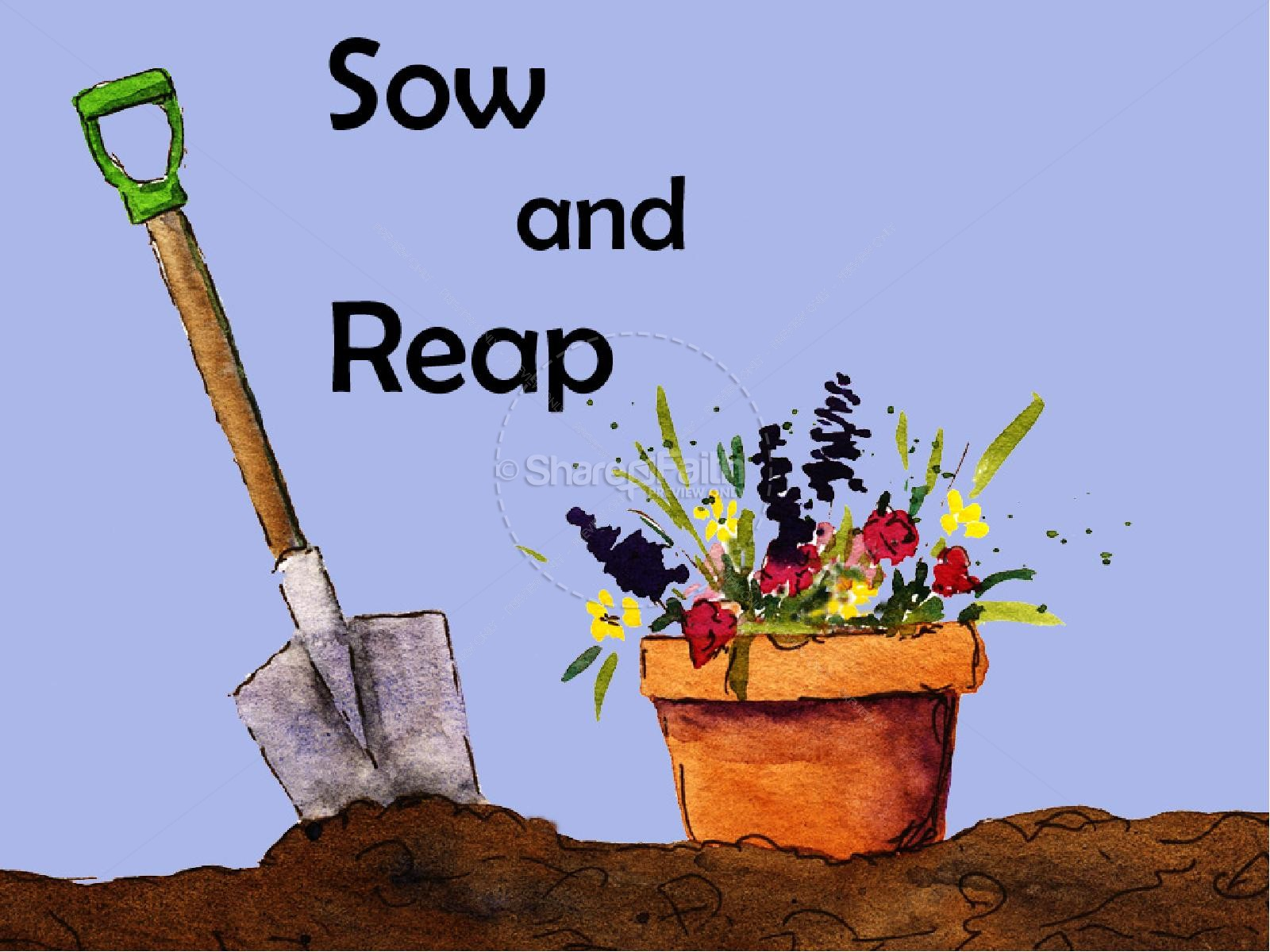 Sow And Reap Powerpoint