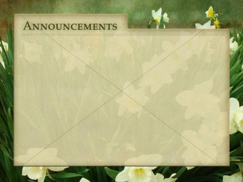 Tulips and Announcements Background