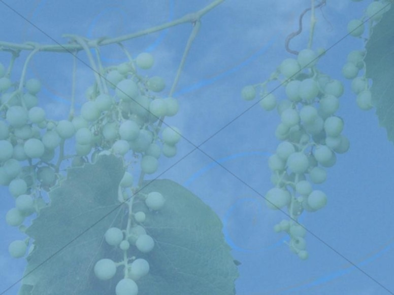 Grapes on a Vine Christian Background