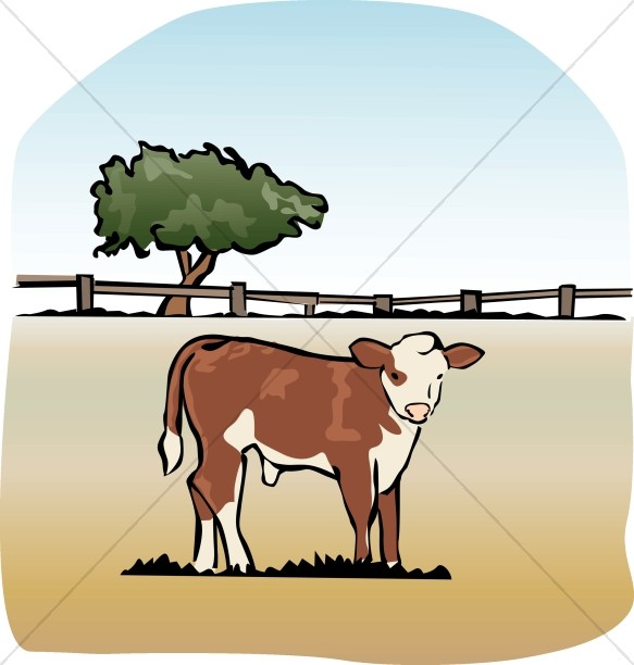 bible fatted calf