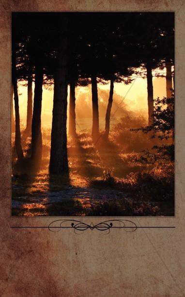 Morning Sun Through The Trees Bulletin Cover