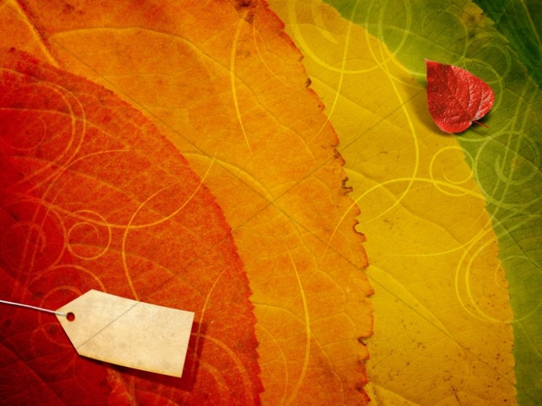 Fall Colors Worship Background