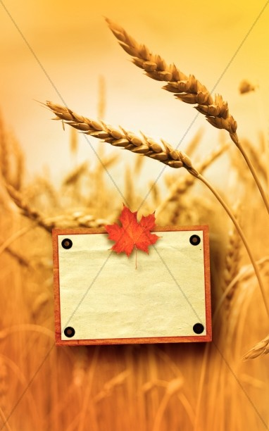 Harvest Time Bulletin Cover