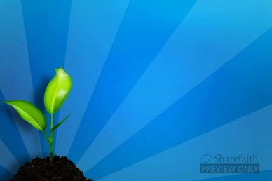 Seed in Fertile Ground Video Background