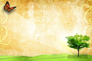 Butterfly and Tree Spring Video Background