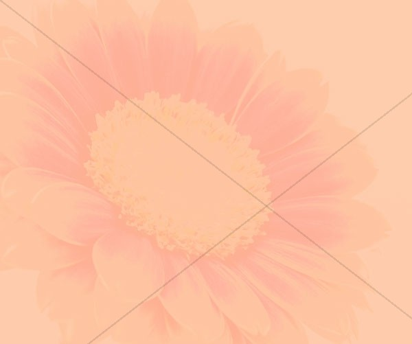 Mothers Day Flowers Email Background