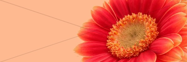Happy Mothers Day Email Banner Image