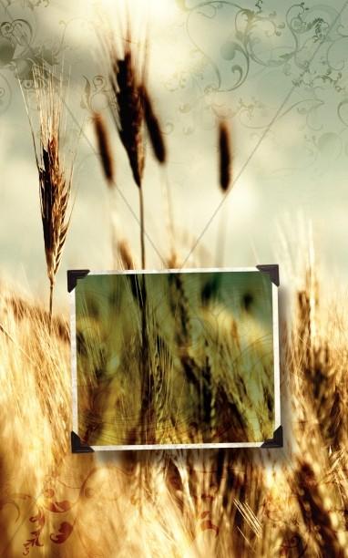 Wheat Bulletin Cover