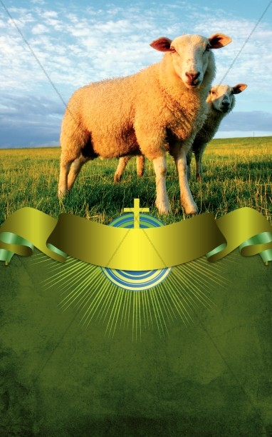 Sheep Bulletin Cover