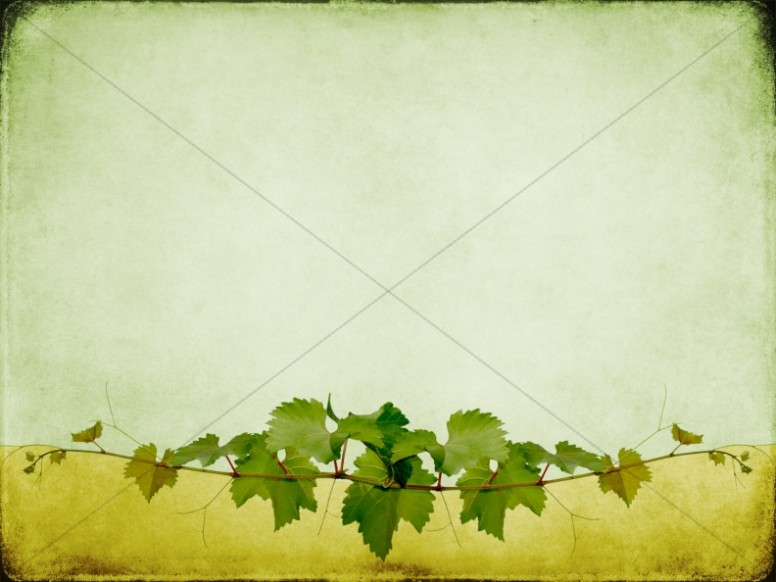 Vines Worship Background