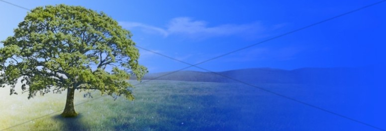 Tree Website Banner