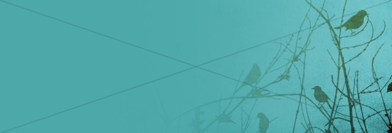 Birds Website Banner