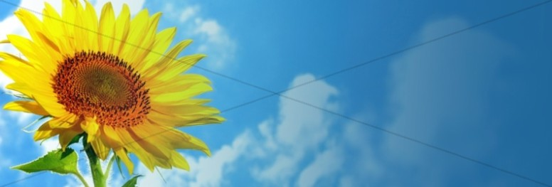 Sunflower Website Banner