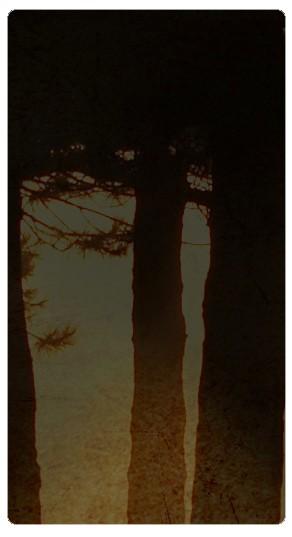 Trees Banner Widget