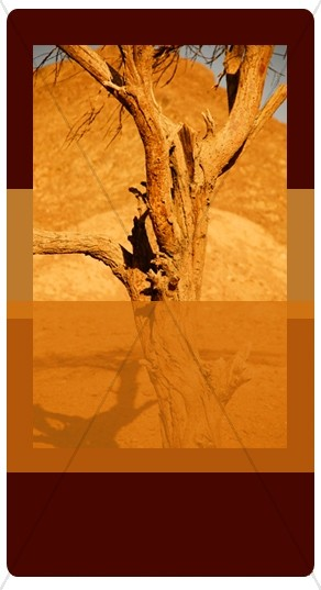 Desert Tree Banner Widget