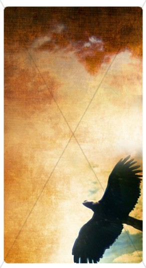 Hawk Banner Widget