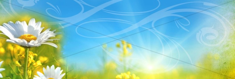 Flowers in Field Website Banner