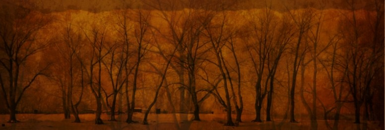 Winter Trees Website Banner