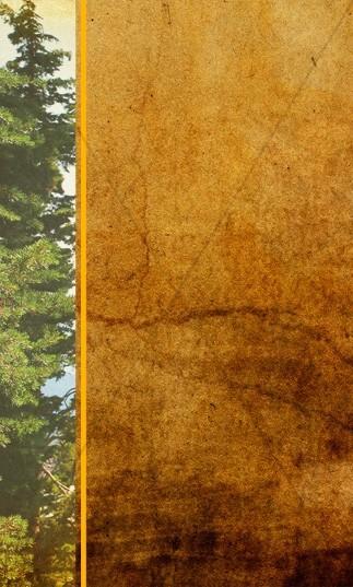 Forest Theme Banner Widget