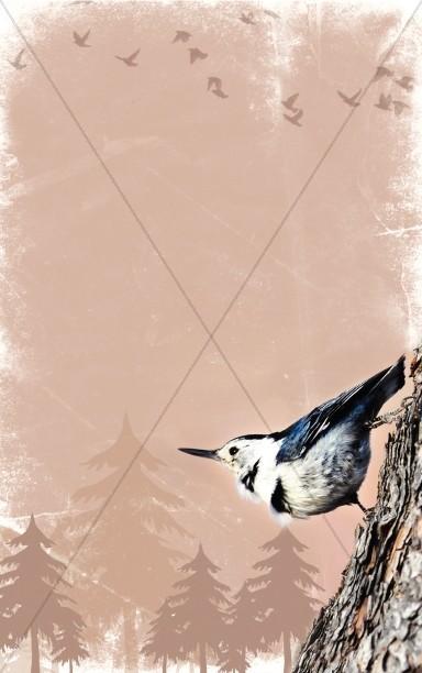 Bird Bulletin