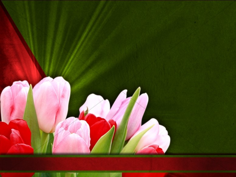 Tulip Flower Worship Background