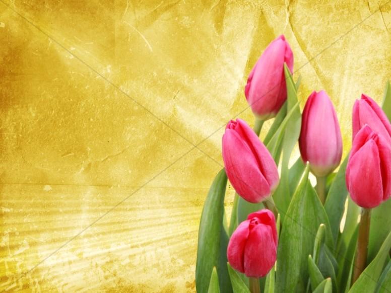 Tulip Worship Background