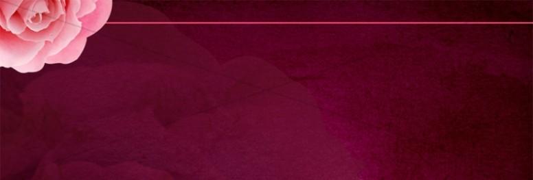 Pink Rose Web Banner