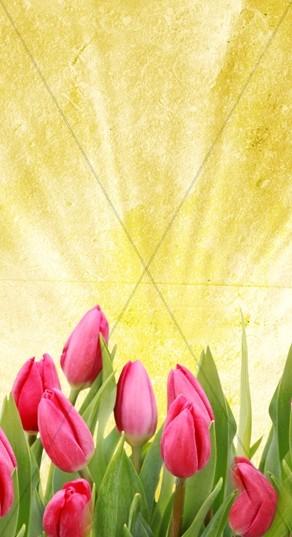 Tulips Website Sidebar