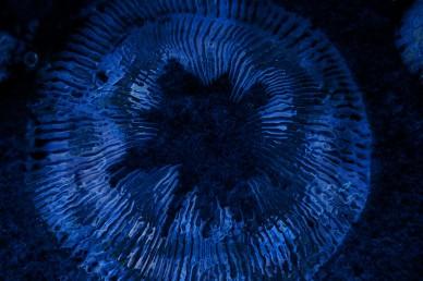 Blue Ripples Worship Video