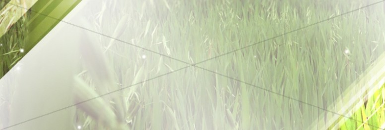 Field of Grass Website Banner