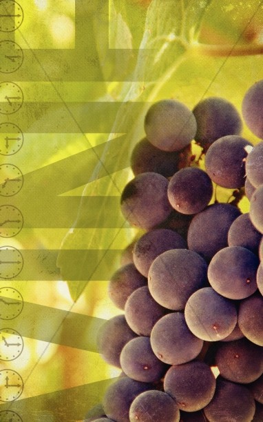 Vineyard Grapes Church Bulletin