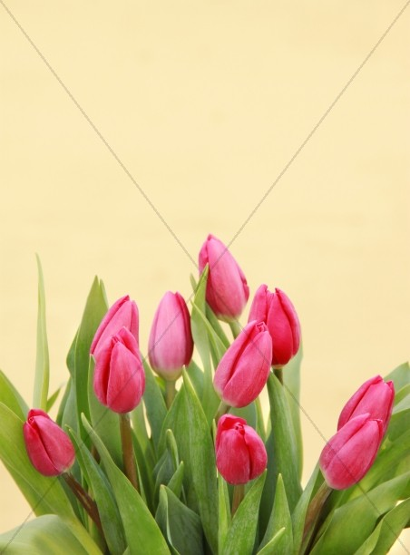 Spring Flowers Christian Stock Images