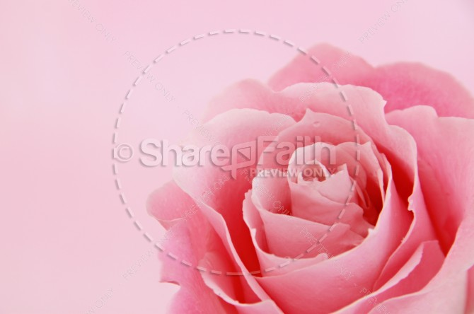 Rose Christian Stock Images