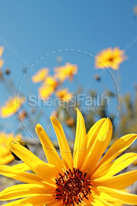 Yellow Flower Christian Stock Images