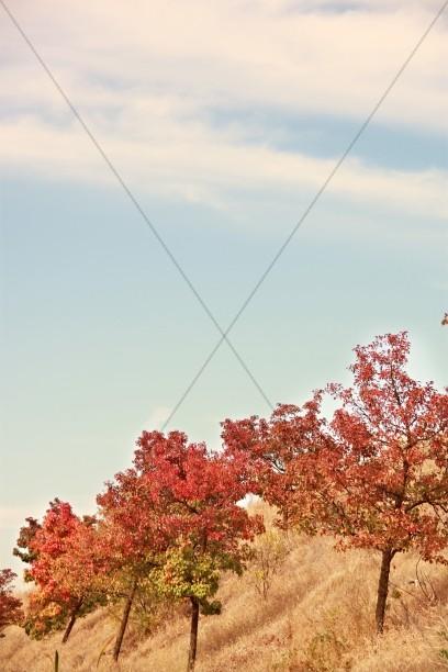 Autumn Scenery Religious Stock Photos