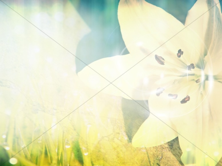 Easter Flower Worship Background