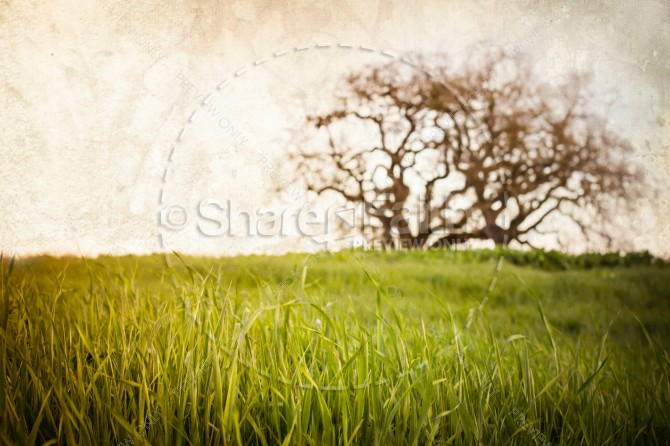 Tree in Field Christian Stock Photo