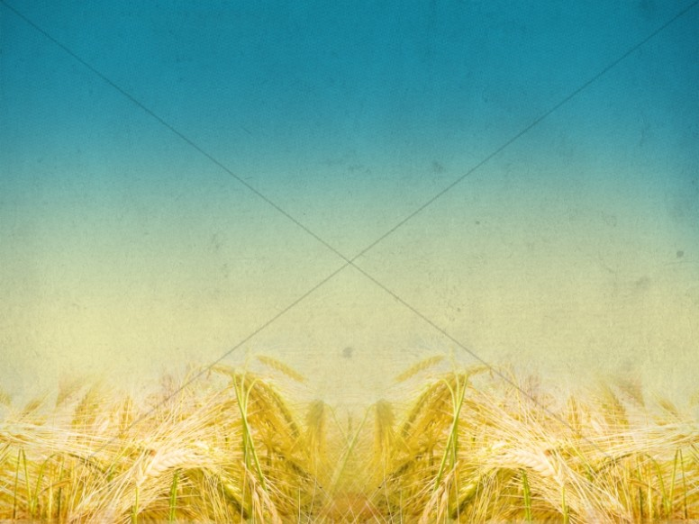 Harvest Fields Blurred Horizon Church Background