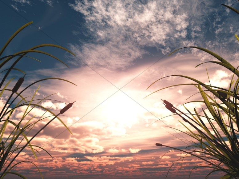 Sunset Through Reeds Ministry Worship Background