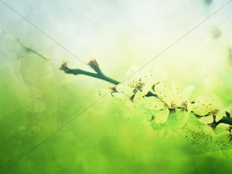 Spring Blossoms Mother's Day Worship Background
