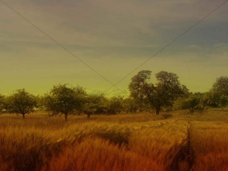Golden Fields Church Background