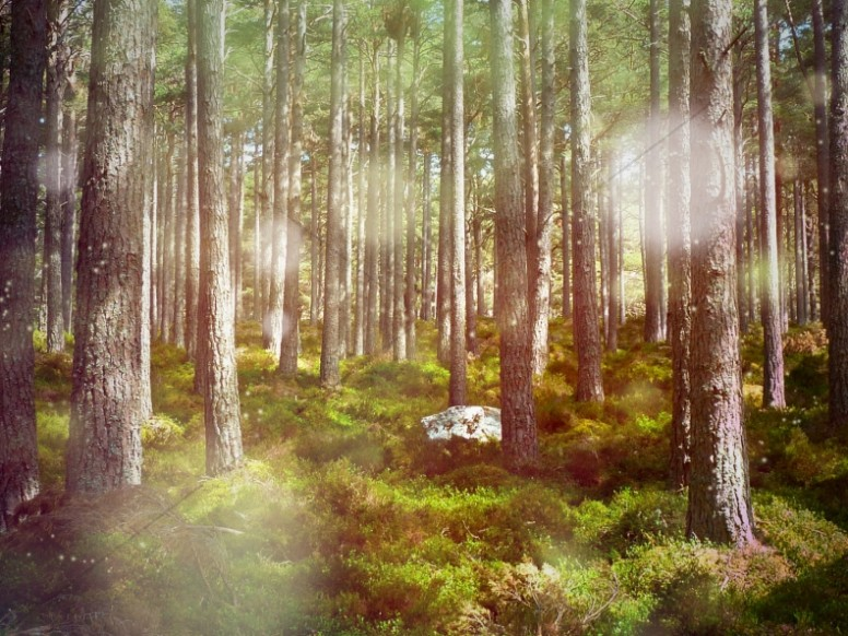 Summer Woodland Scene Ministry Stock Image