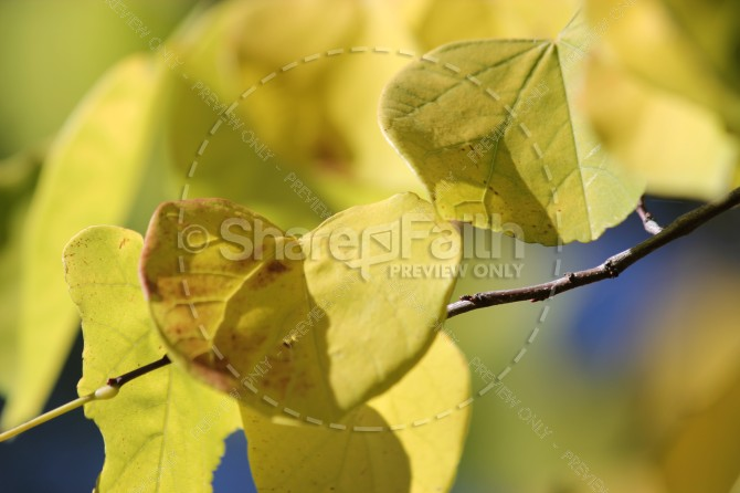 Yellow Leaves Ministry Stock Photo