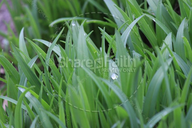 Greenest Grass Ministry Stock Photo