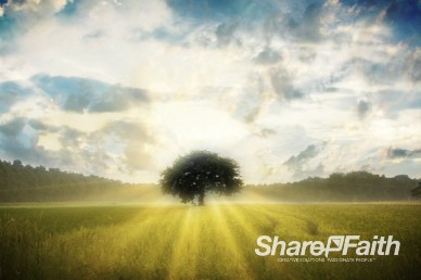Tree in Field Christian Worship Video Background