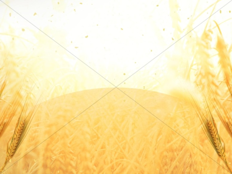 Golden Grains Harvest Worship Still