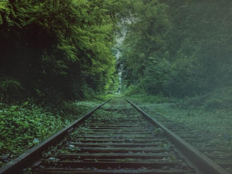 Tracks Through Forest Worship Background