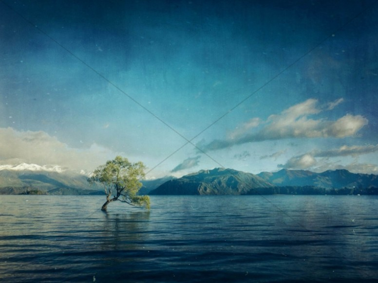 Tree In Waters Religious Wallpaper